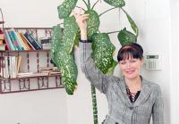 Именно такой гигантский цветок вырос в кабинете директора ООО ТП «Маяк» Анны Потехиной. Фото В. Бербенца