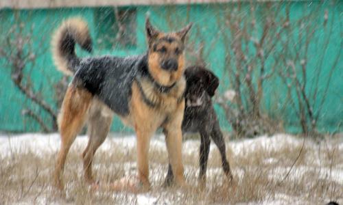 Эти собаки живут по понятиям. Фото В. Бербенца
